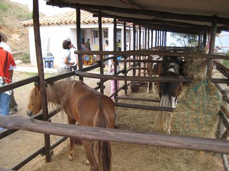 Caballos panachi-450x337